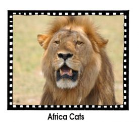 Africa Cats